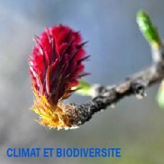 vignette biodiv
